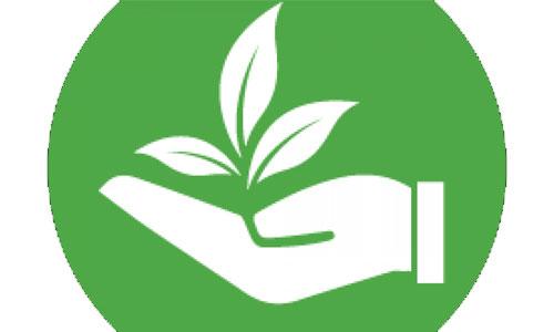 Hoạt động xã hội: Chung tay vì môi trường xanh sạch đẹp